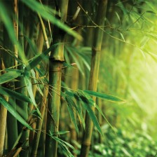 Fototapeta Bambus 2