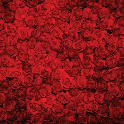 Fototapeta Vrtnice